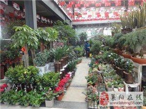 交運旅游|青州古城+花卉市場一日游