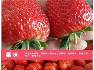 香恋果业 丹东九九草莓(牛奶草莓)3斤150元 产