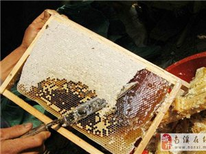 花生坡牌蜂蜜