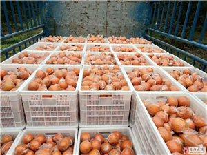 廠家重慶食品級膠筐、水果筐蔬菜筐、周轉箱、簍子和蘿