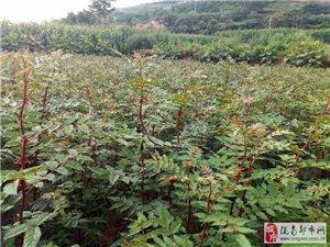 西和县绿顺源种养殖农民专业合作社