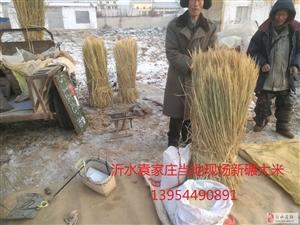 2019沂水袁家庄当地新碾大米