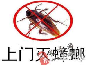 灭蟑螂、灭老鼠,河南帮帮虫控专业、环保、高效