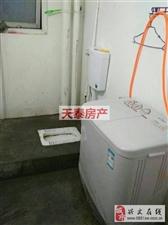 光明坝电梯房3室2厅1卫500元/月
