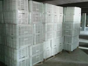 新村瓶盖厂倒闭处理200个塑料大筐