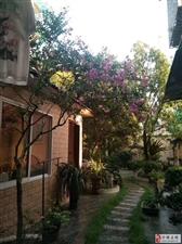 惠明小区1楼带花园院坝300平99.8万元