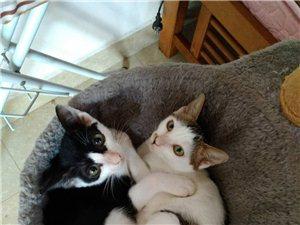 2只小貓贈送