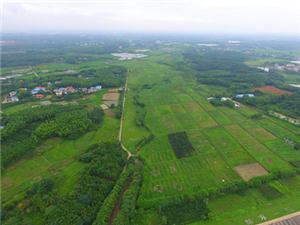 橫溝橋鎮600余畝高標準基本農田轉承包