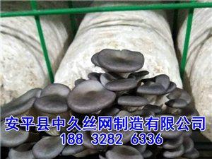 �B殖蘑菇�S镁W片 多�格蘑菇培�B架 浸塑蘑菇�W片