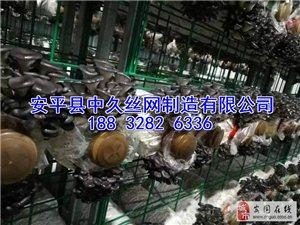 大棚蘑菇�B殖架浸塑蘑菇�W片 出菇�W格�W架平菇出菇架