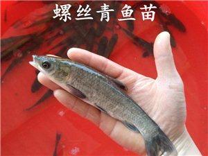 鸭嘴鱼、黄颡鱼、白鲳鱼、草鱼、鲤鱼、胡子鲶、花白鲢