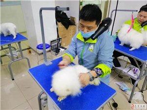 小班授课 免费试学|圣宠宠物美容学校 宠物美容培训