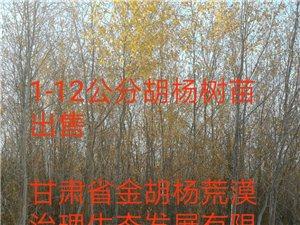 胡杨树、沙柳、沙枣、河北杨、梭梭、黑枸杞等苗木出售
