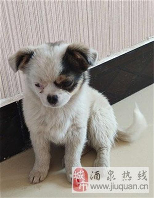 出售一只可爱的小狗狗