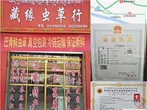 批发西藏特产冬虫夏草那曲产地老百姓家里直接收购销售