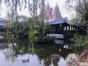 古典园林办公,精装独立办公室出租30到60平免物业