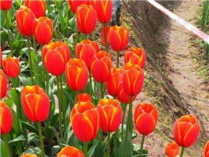 重庆花卉园,重庆草花生产基地 重庆草花种植基地