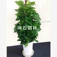 坤石园林上海绿植租摆专业供应商