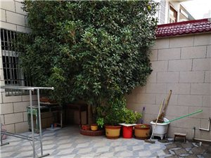 乔四樱桃园小区两层半带院子别墅出售