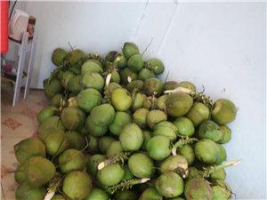 椰子批发零售