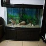 出售二手鱼缸电视