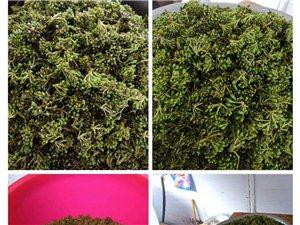 长阳刘女士现有高山纯天然野生山胡椒鲜货出售,批发零售均可!