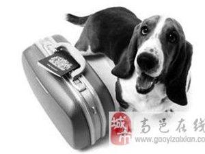 国内宠物托运供应高效可靠的深圳宠物空运