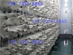 香菇出菇網格網架 大棚用食用菌培養架可定制 杏鮑菇