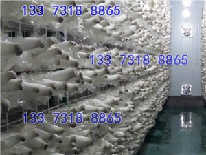 食用菌網格網架