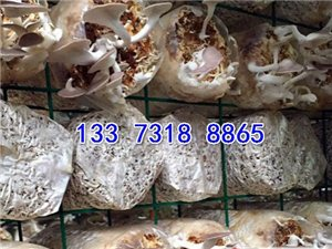 蘑菇網片 蘑菇網格 出菇房生長架