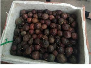 高价大量收清园百香果次果、皱果、病果-2元/斤/落地果也要