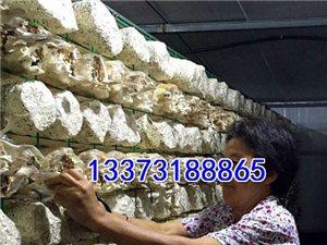 靈芝發菌房培育架 培菌房食用菌網格 香菇養殖網格架