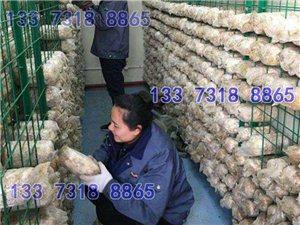 食用菌架浸塑網格浸塑鐵絲網片出菇架