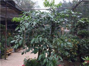 瀘州市盆栽植物零售批發;租賃租擺管理;會展花園布置