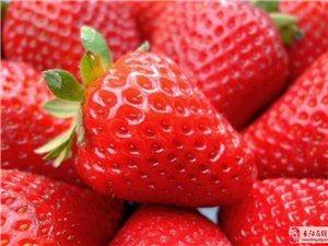长阳梨子坪生态草莓 园降价啦!
