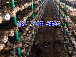 香菇架子香菇出菇架子