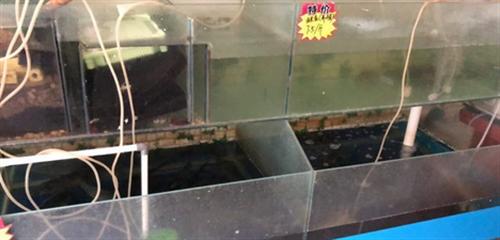 因水产品店需要增加鱼量,现出售一组过滤鱼缸