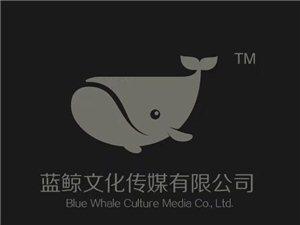 蓝鲸平面广告设计师培训 专业广告设计师