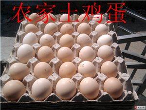 福州土鸡蛋多少钱一斤,福州土鸡蛋-福州正宗土鸡蛋