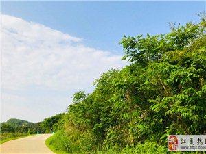 武汉周边一日游 带你感受农家田园的生活气息