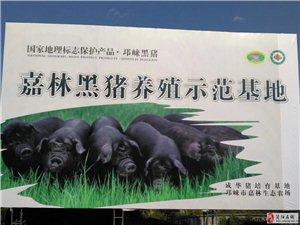 嘉林黑猪加盟,开生态肉专卖店