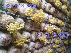 食用菌網格架 食用菌出菇網格出菇架 出菇網架