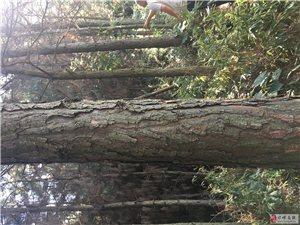 邛崍市平落鎮花揪村林地經營權,森林、林木轉讓