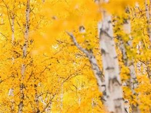 黄角树2室350元/月