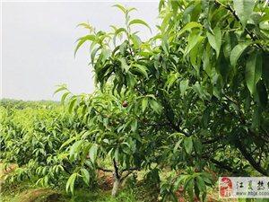 武汉周边采摘园,乐农湖畔竟然是这样的