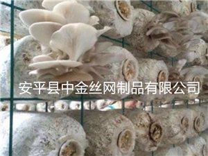 養菌架@東營養菌架@哪里生產養菌架@廠家批發