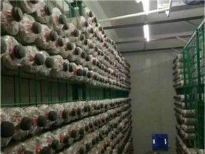食用菌菌架@樂清食用菌菌架@食用菌菌架廠家直銷