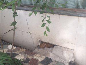 可爱小猫找家