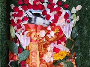 鄭州寵物火化、鄭州寵物殯葬