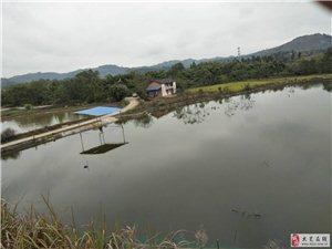 放钓中的鱼塘虾塘及农村房屋土地出租